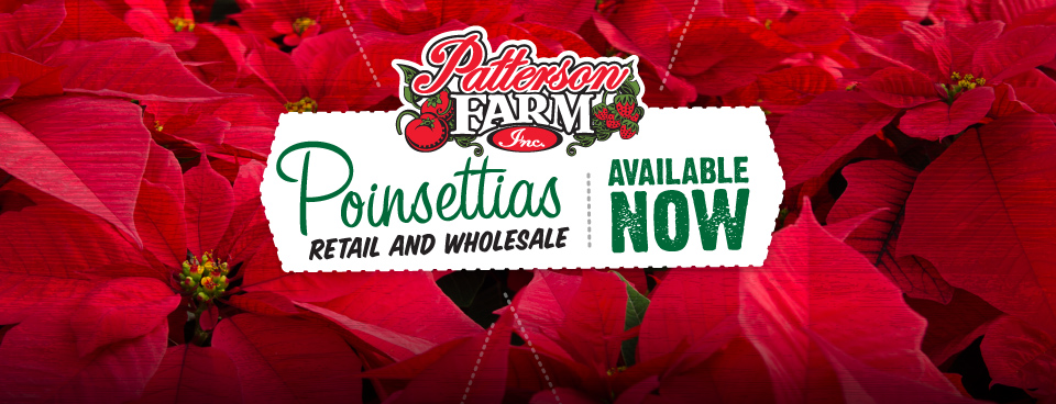 slider-farm-poinsettias
