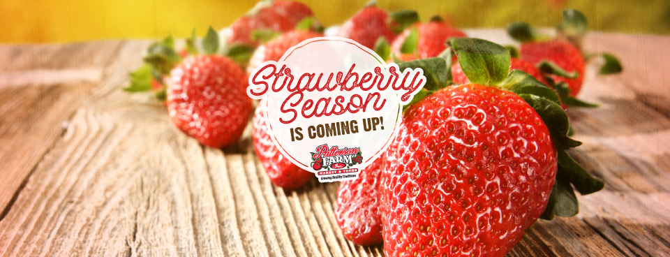 Strawberries – Pick Your Own & Already Picked