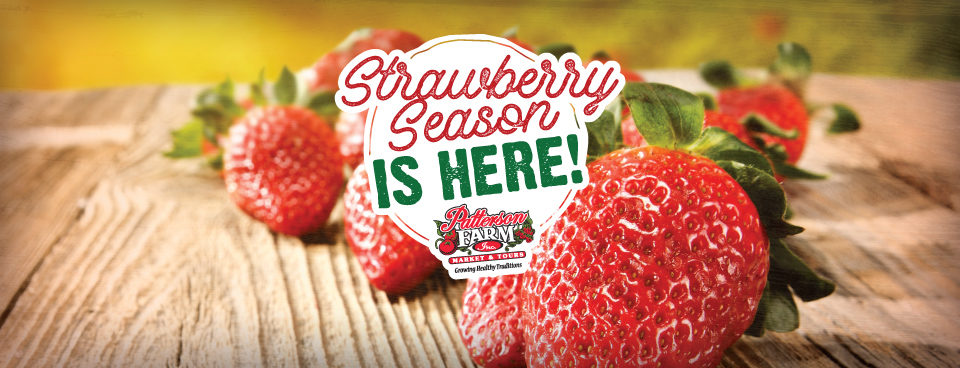 Strawberries – Pick-Your-Own & Already Picked