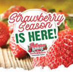 7 Best Things about Strawberry Season at Patterson Farms